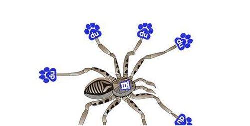 识别百度搜索引擎蜘蛛的方法